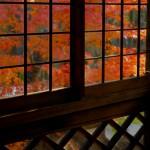 サンルームより南庭紅葉